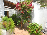 Back terrace - fresh and green Info and links about Andalucia and Malaga